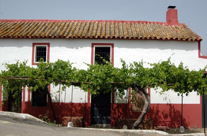 Pagos de huerta - Turismo Palma del Río - Córdoba