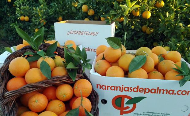 Naranjas - Turismo Palma del Río (Córdoba)